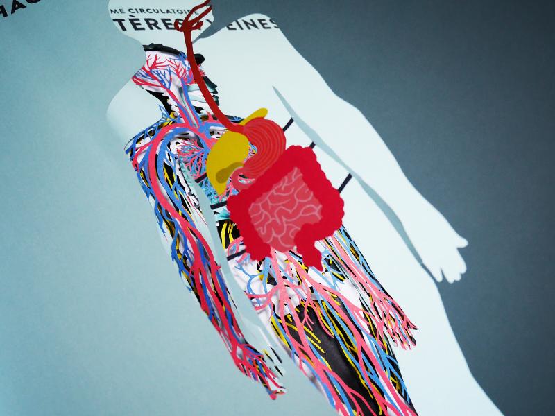 anatomie3